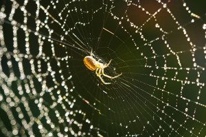 spider-and-web