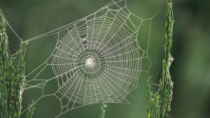 spider-1920-1080-wallpaper